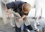 Cornell University Offers Farrier Courses